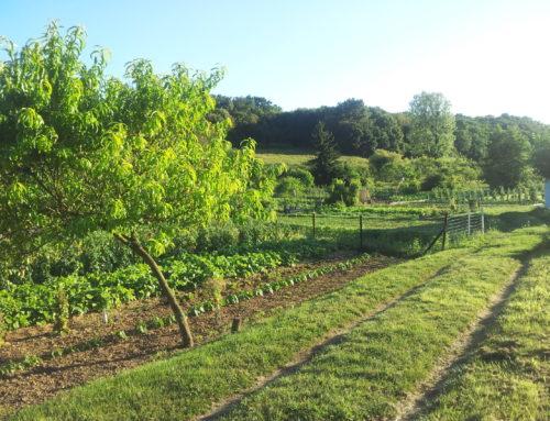 Jardins familiaux : cultivez votre jardin !